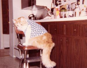Cat-April-1982
