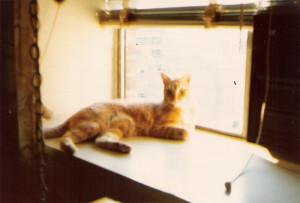 Cat-July-1975