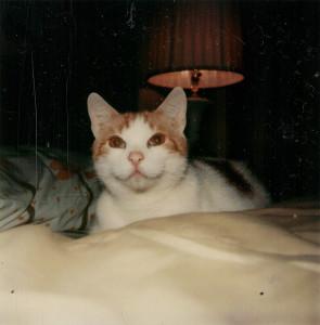 Cat-Lamp