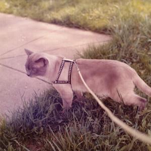 Cat-Summer-1973